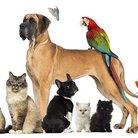 Family Pet Show